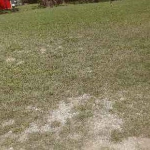 Lawn Care Service in Hitchcock, TX, 77563