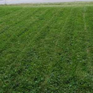 Lawn Care Service in Kansas City, MO, 64157