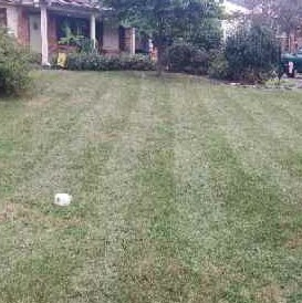Lawn Care Service in St. Louis, MO, 63119