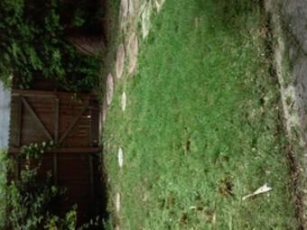 Lawn Mowing Contractor in St Petersburg, FL, 33701