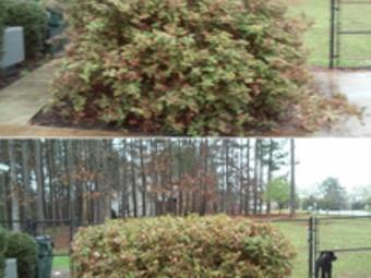 Lawn Mowing Contractor in Mcdonough , GA, 30252