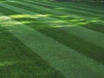Lawn Mowing Contractor in Clearwater, FL, 33755