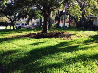 Lawn Mowing Contractor in Brandon , FL, 33511