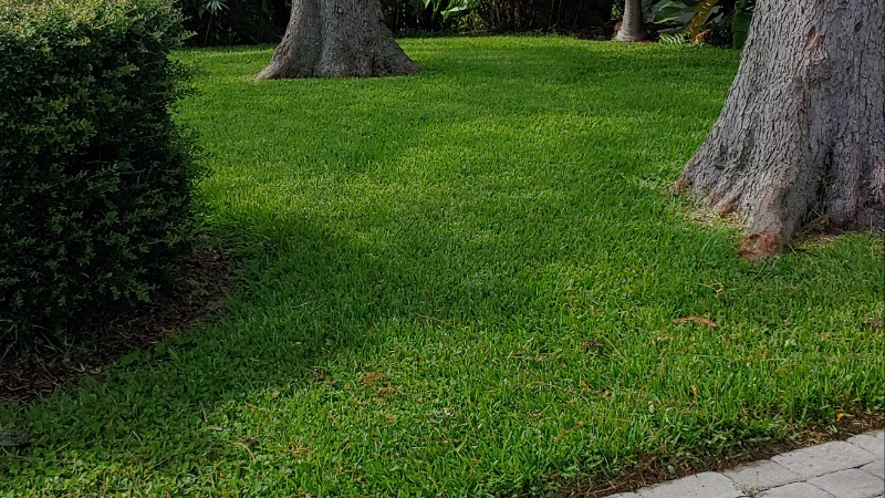 Lawn Mowing Contractor in Largo, FL, 33773