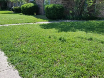 Lawn Mowing Contractor in Irving, TX, 75063