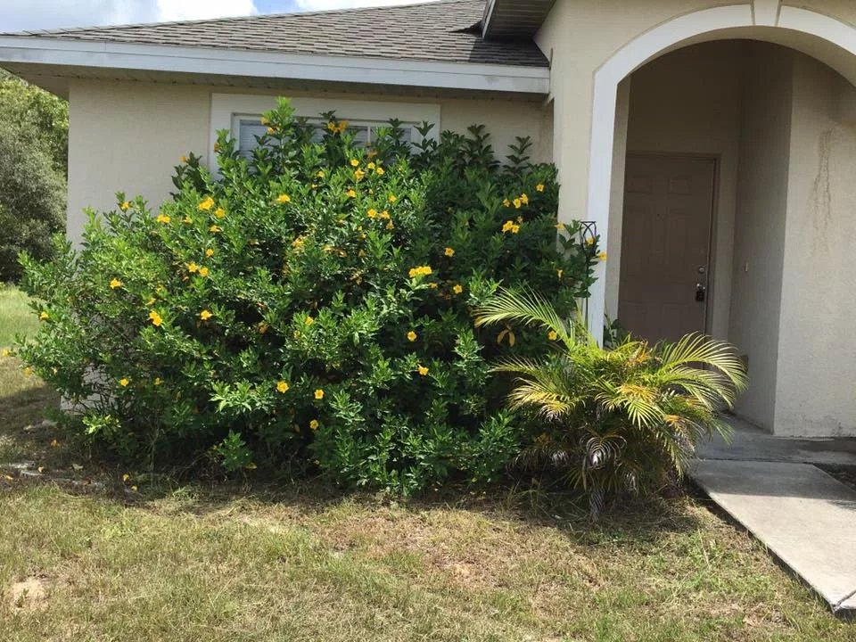 Lawn Mowing Contractor in Kissimmee, FL, 34746