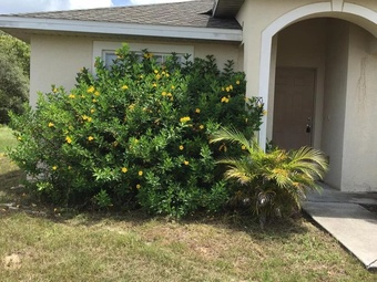 Lawn Mowing Contractor in K Issimmee , FL, 34746