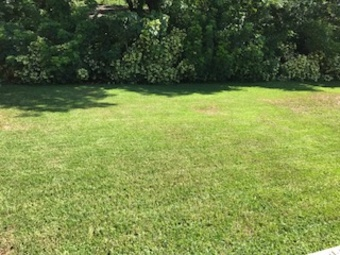 Lawn Mowing Contractor in Tampa, FL, 33629