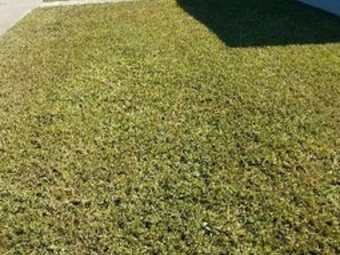 Lawn Mowing Contractor in Sunrise, FL, 33313