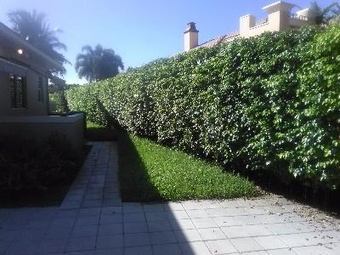 Lawn Mowing Contractor in Pompano Beach, FL, 33069