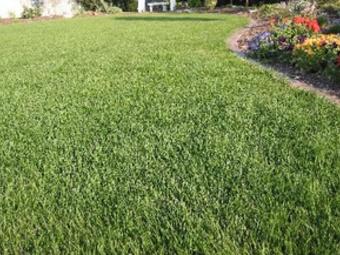 Lawn Mowing Contractor in Wesley Chapel, FL, 33543