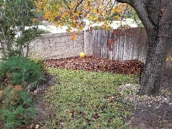 Lawn Mowing Contractor in Pflugerville, TX, 78660