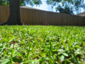 Lawn Mowing Contractor in Metairie, LA, 70005