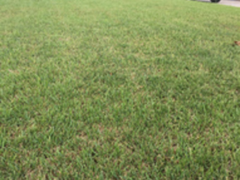Lawn Mowing Contractor in St Petersburg, FL, 33713
