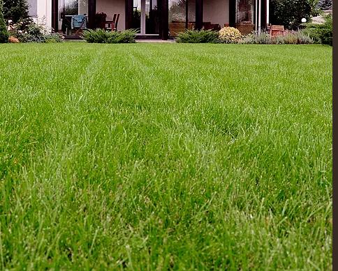 Lawn Mowing Contractor in Sacramento, CA, 95817