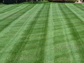 Lawn Mowing Contractor in Bradenton, FL, 34207