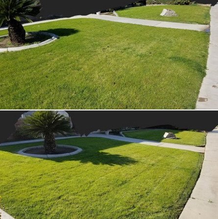 Lawn Mowing Contractor in Wasco , CA, 93263