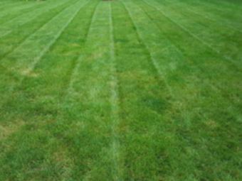 Lawn Mowing Contractor in Whiteland, IN, 46184