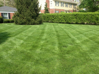 Lawn Mowing Contractor in Indianapolis , IN, 46240