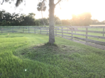 Lawn Mowing Contractor in Lake Helen , FL, 32744