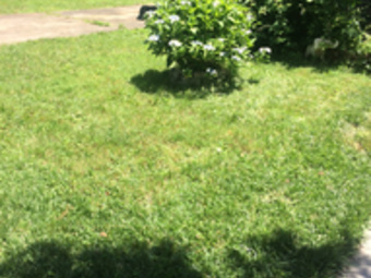 Lawn Mowing Contractor in Norfolk , VA, 23505