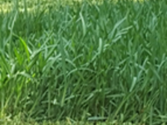 Lawn Mowing Contractor in Houston, TX, 77071