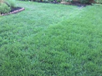 Lawn Mowing Contractor in Plano, TX, 75025