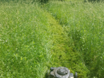 Lawn Mowing Contractor in Aliquippa, PA, 15001
