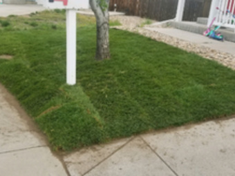 Lawn Mowing Contractor in Arvada, CO, 80002