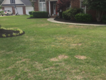 Lawn Mowing Contractor in Columbia , SC, 29210