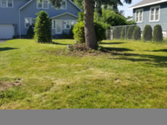 Lawn Mowing Contractor in Watervliet, NY, 12189