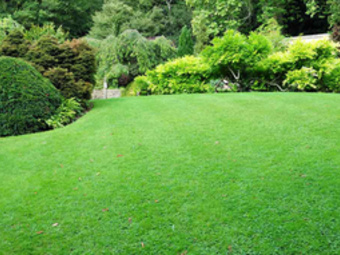 Lawn Mowing Contractor in Clermont, FL, 34714