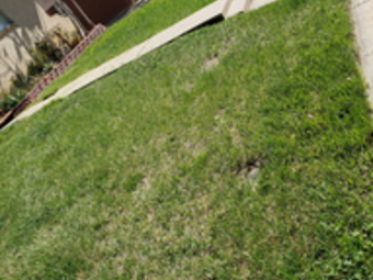 Lawn Mowing Contractor in Westminster, CO, 80031