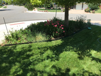 Lawn Mowing Contractor in Denver, CO, 80235