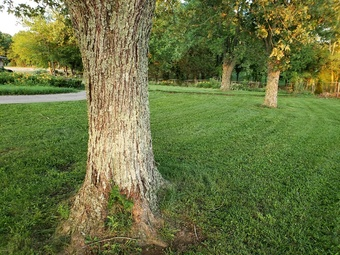 Lawn Mowing Contractor in Bell Buckle, TN, 37020