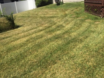 Lawn Mowing Contractor in Silver Spring, MD, 20906