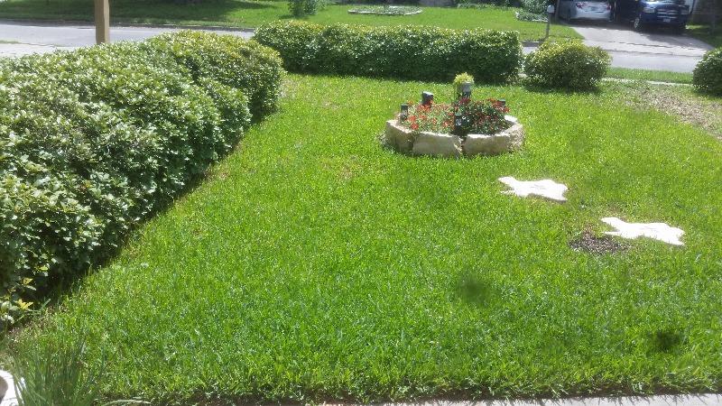 Lawn Mowing Contractor in San Antonio, TX, 78227