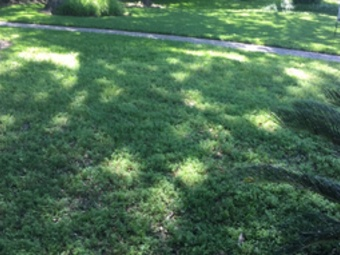 Lawn Mowing Contractor in Houston, TX, 77068