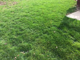 Lawn Mowing Contractor in Olathe, KS, 66061