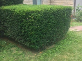 Lawn Mowing Contractor in Independence, MO, 64056