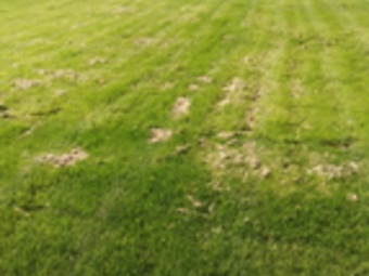 Lawn Mowing Contractor in Kansas City, KS, 66104