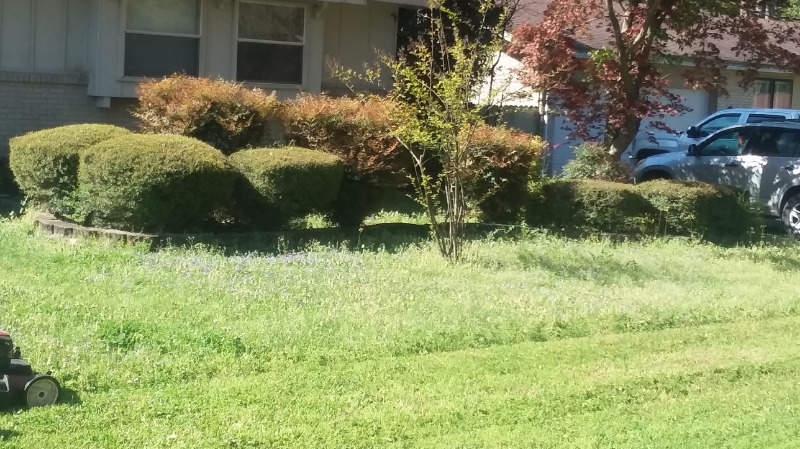 Lawn Mowing Contractor in Hot Springs, AR, 71913