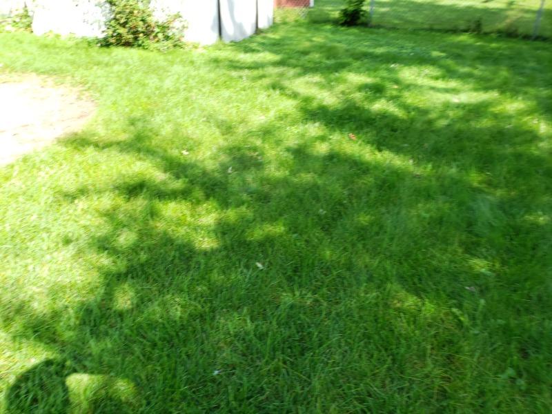 Lawn Mowing Contractor in Oak Lawn, IL, 60453