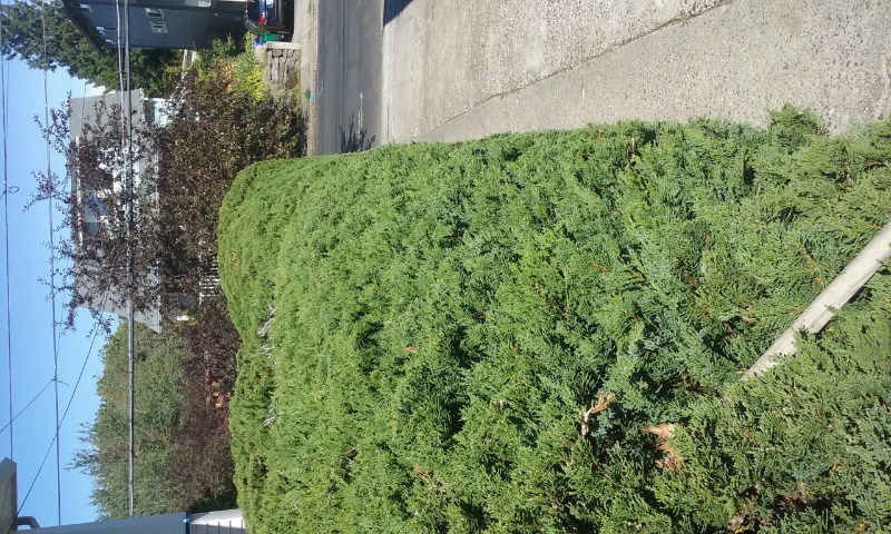 Lawn Mowing Contractor in Tacoma, OR, 97230