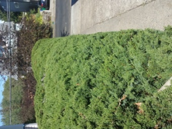 Lawn Mowing Contractor in Portland, OR, 97230