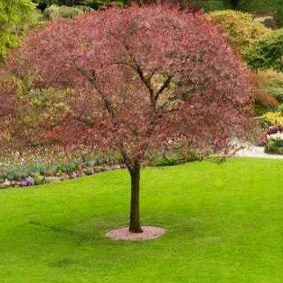 Lawn Mowing Contractor in Beaverton, OR, 97008