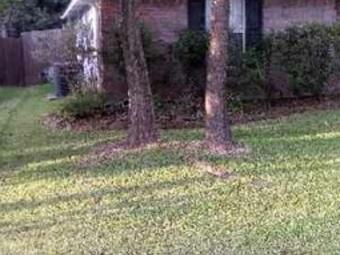 Lawn Mowing Contractor in Conroe, TX, 77385