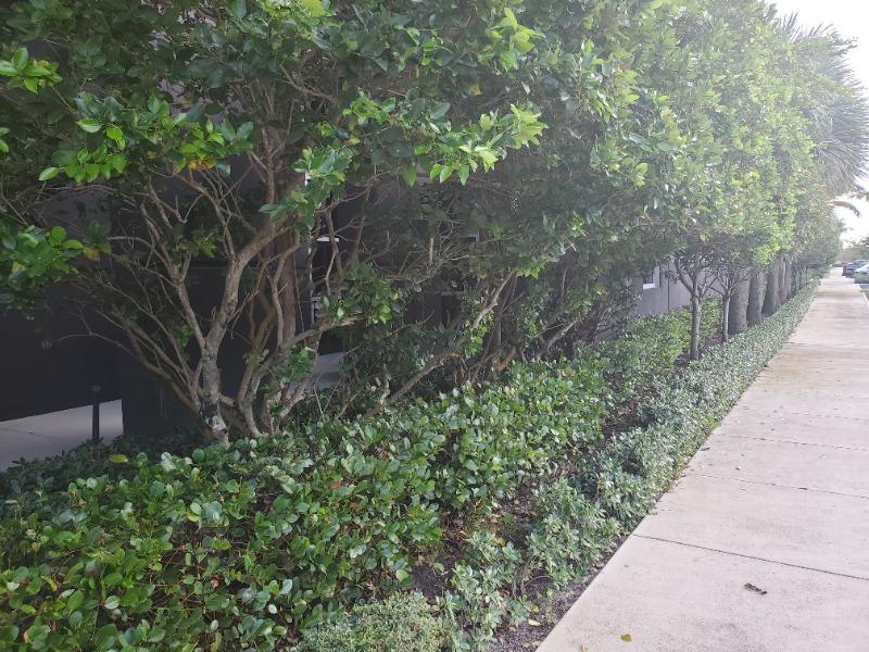 Lawn Mowing Contractor in Miami Gardens, FL, 33169
