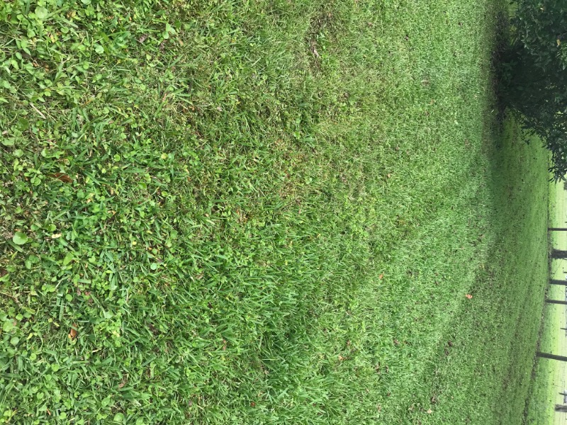 Lawn Mowing Contractor in Hawthorne, FL, 32640