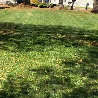 Lawn Mowing Contractor in Richmond City, VA, 23224